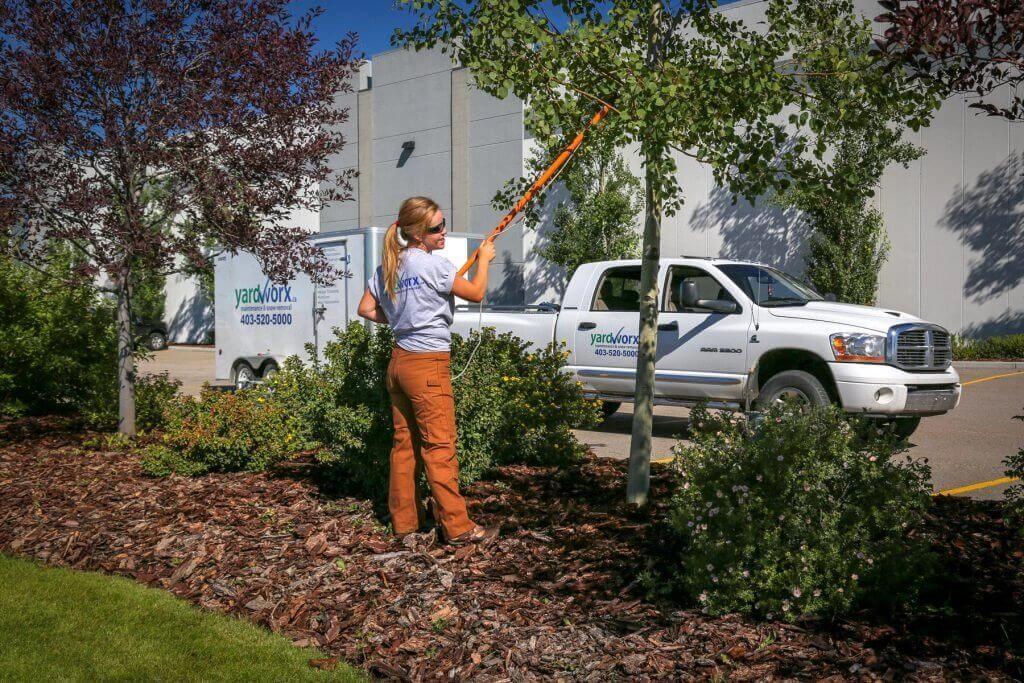 Tree Care in Calgary & Edmonton