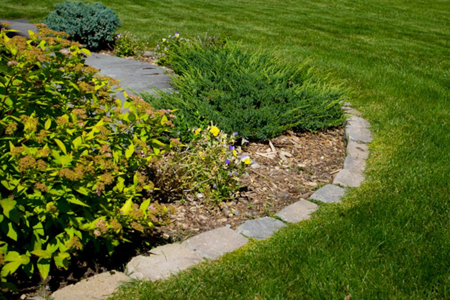 7 Effective Spring Lawn Care Preparation Steps