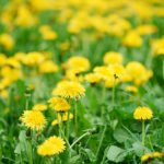 Lawn Weed Control in the Spring