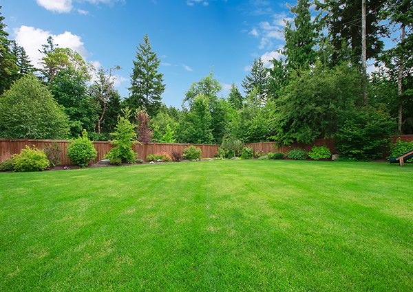 Spring Lawn Maintenance Tips
