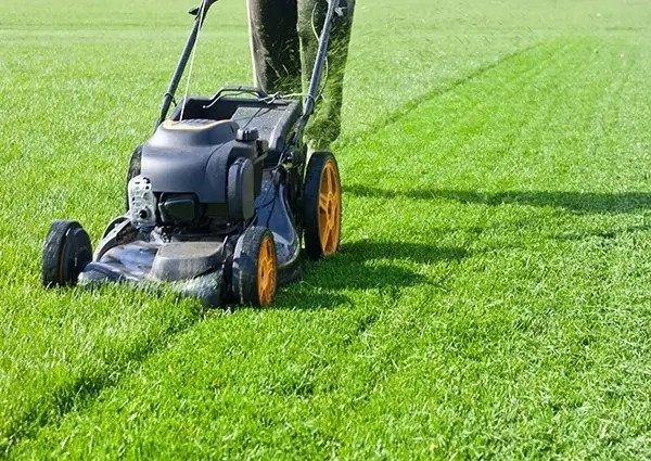 Lawn Maintenance Edmonton