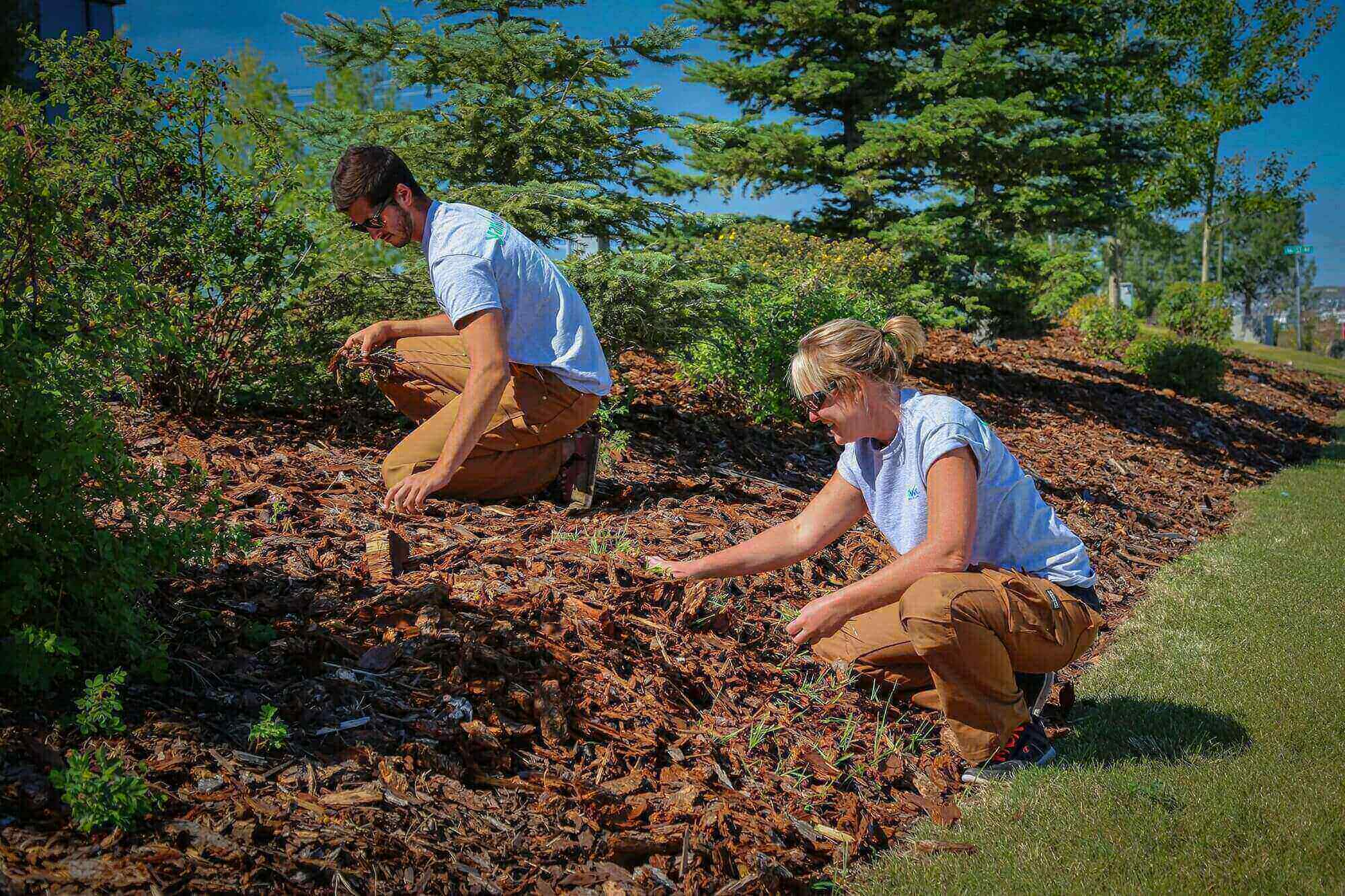 Garden Bed Maintenance in Calgary and Edmonton