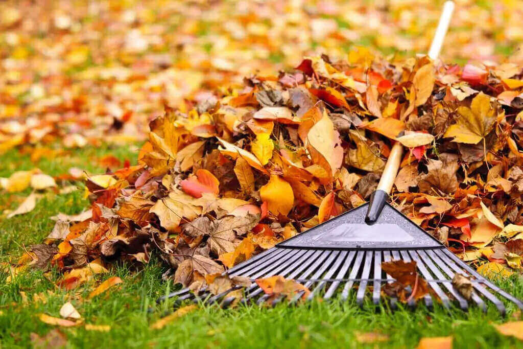 Fall Lawn Care in Calgary and Edmonton
